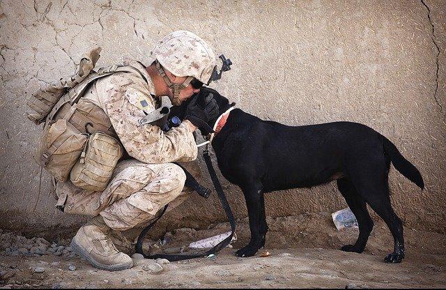 pes vojáka
