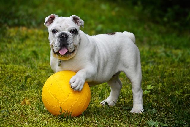 buldoček s míčkem